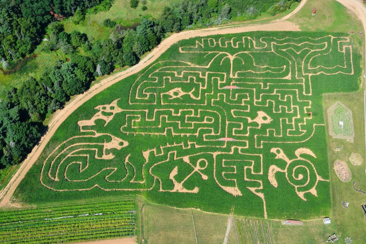 Corn Maze U Pick Noggins Corner Farm Market