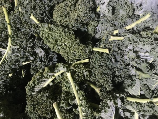 Kale, Green Curly 385g