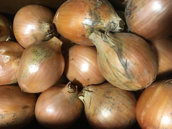 Onions, Yellow 900g